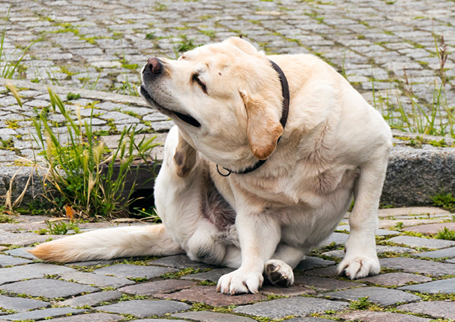 How to Manage Pet Allergies